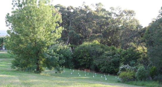Shows new trees planted with the volunteers of Baringa Special School, Edward Hunter Heritage Bush Reserve