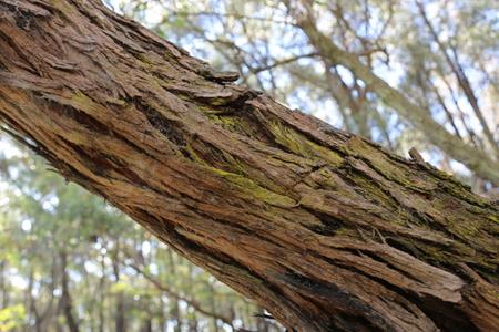 Eucalypts Edward Hunter Heritage Bush Reserve