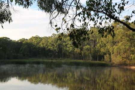Shows view of the dam in the early morning, Edward Hunter Heritage Bush Reserve, Moe