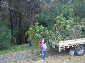 Shows volunteers lifting pittosporum branches into truck for green disposal, Edward Hunter Heritage Bush Reserve Weedbuster Day