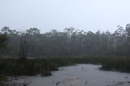 Shows rain at the dam, Edward Hunter Heritage Bush Reserve