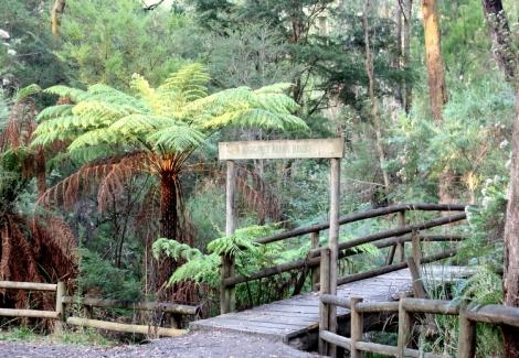 Shows the Margaret Adams Bridge, Edward Hunter Heritage Bush Reserve