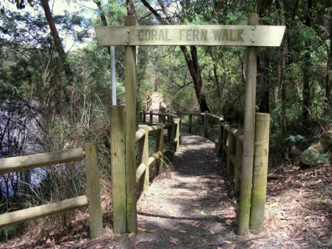 Shows the northern entrance to the Coral Fern Walk, Edward Hunter Heritage Bush Reserve