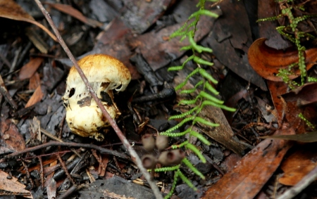 Shows unidentified agaric, Edward Hunter Heritage Bush Reserve
