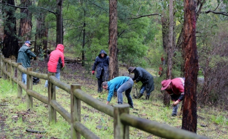 Shows new plantings at Duckpoint, Edward Hunter Heritage Bush Reserve