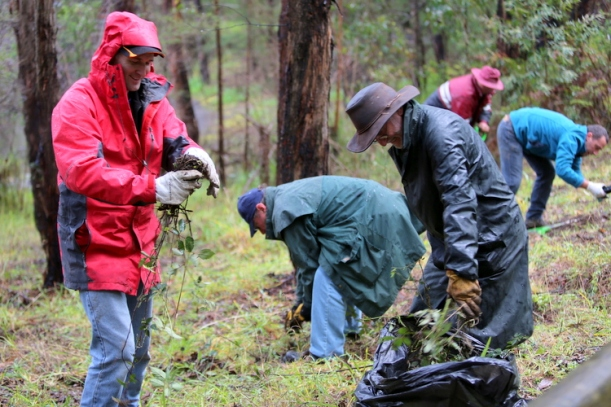 Shows activity at Duck Point, Edward Hunter Heritage Bush Reserve