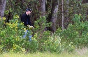 Shows volunteer removing broom, Edward Hunter Heritage Bush Reserve