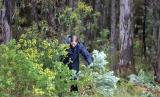 Shows broom removal, Edward Hunter Heritage Bush Reserve