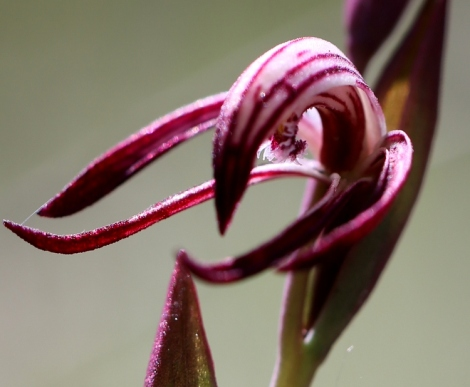 Spring Orchids Beaks And Birds Edward Hunter Heritage