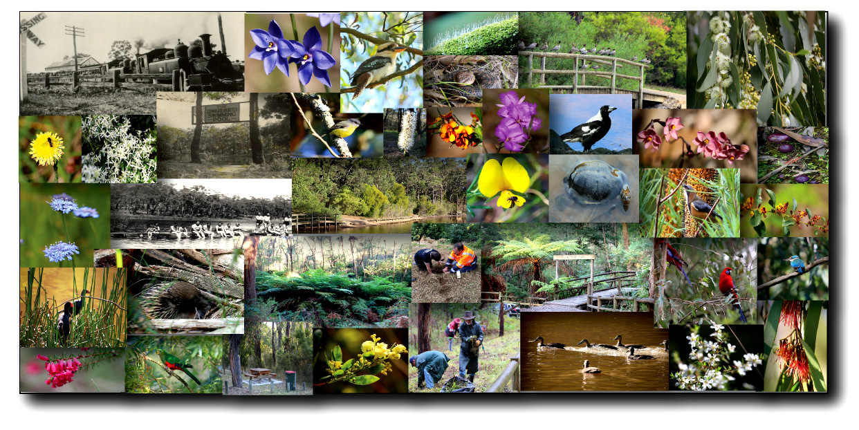 Shows a mosaic of images from Edward Hunter Heritage Bush Reserve