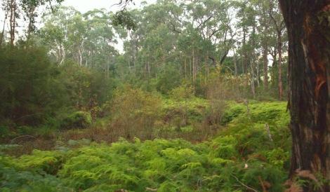 shows willows in reservoir, Edward Hunter Heritage Bush Reserve