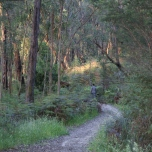 Shows path in the Heart Starter Circuit, Edward Hunter Heritage Bush Reserve