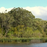 Shows view over the northern side of the reservoir, Edward Hunter Heritage Bush Reserve