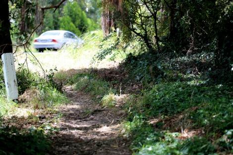 Shows ivy infested area, Edward Hunter Heritage Bush Reserve