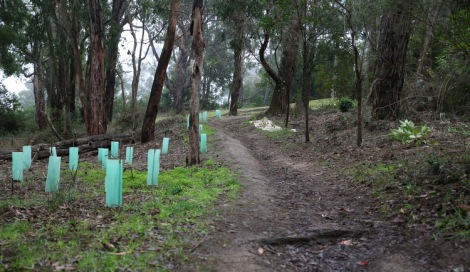Shows after image of TB Drew Park and plantings by Baringa School, Edward Hunter Heritage Bush Reserve