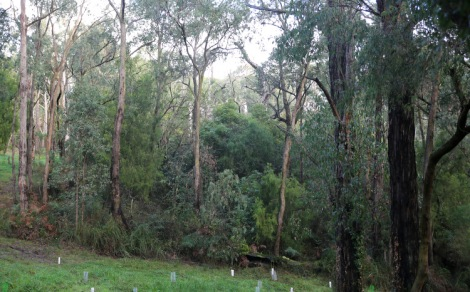 Shows before image of weed infestation in section of Reserve, Edward Hunter Heritage Bush Reserve