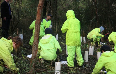Shows CVA volunteers planting hop goodenia, Edward Hunter Heritage Bush Reserve
