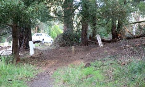 Shows after image of ivy removal, Edward Hunter Heritage Bush Reserve