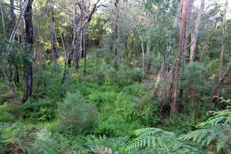 Shows the change expected in the vegetation, Edward Hunter Heritage Bush Reserve