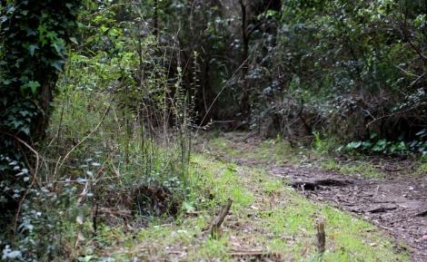 Shows before image of weed infestation in TB Drew Park, Edward Hunter Heritage Bush Reserve