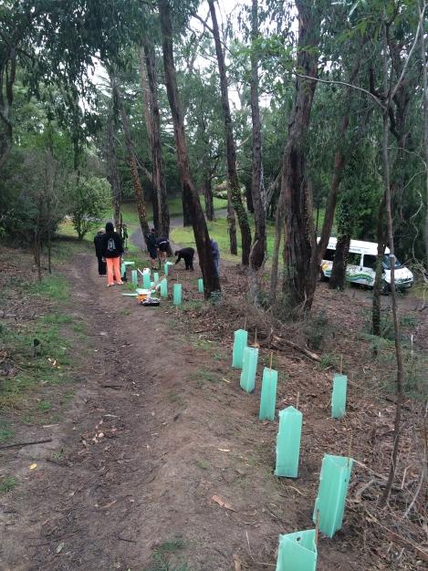 Shows Baringa School students planting in TB Drew Park